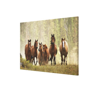 Horses cresting small hill during roundup, 2 canvas print