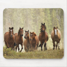 Horses cresting small hill during roundup, 2 mouse pads