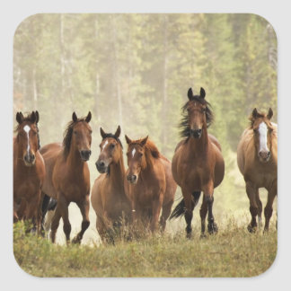Horses cresting small hill during roundup, 2 square sticker