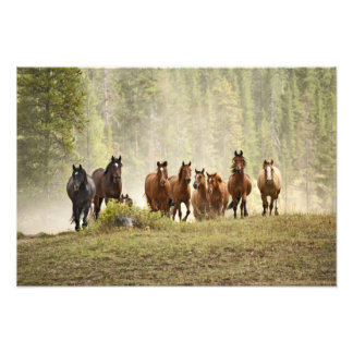 Horses cresting small hill during roundup, photographic print