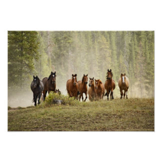 Horses cresting small hill during roundup, poster