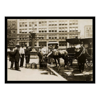 Horses Drinking Water in New York City 1911 Posters