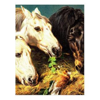 Horses eating hay postcard