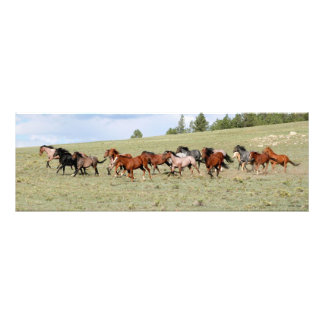 Horses Enjoying the Wide Open West Photo Print