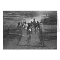 Horses entering a corral cards