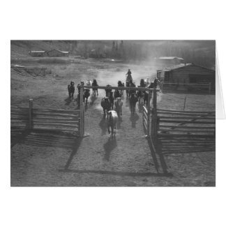 Horses entering a corral greeting card