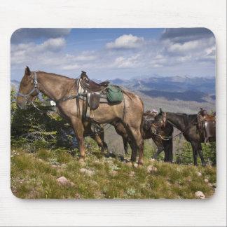 Horses (Equus ferus caballus) at scenic overview Mouse Pad