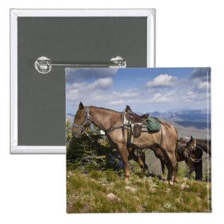 Horses (Equus ferus caballus) at scenic overview Pinback Button