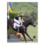 Horses Eventing  Postcard