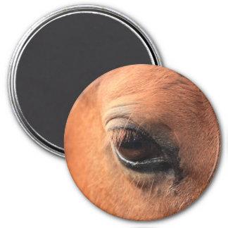 Horse's Eye Fridge Magnets