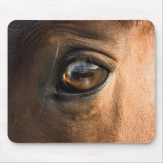 Horses Eye Mousepad