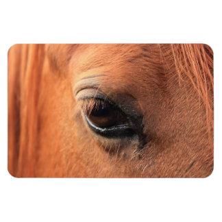 Horse's Eye Vinyl Magnets