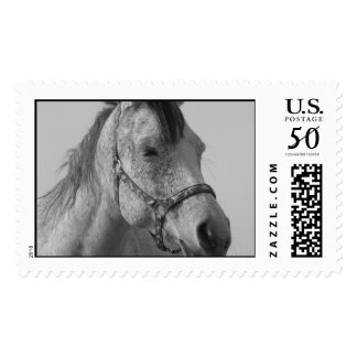horses farm ranch equine western sports love postage