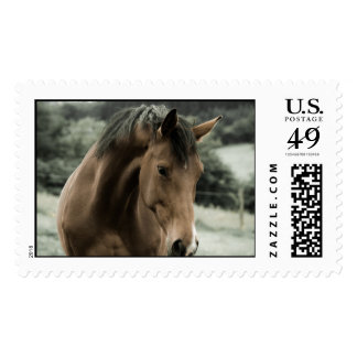 horses farm ranch equine western sports love stamp