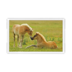 Horses foals in field. acrylic tray