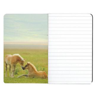 Horses foals in field. journal
