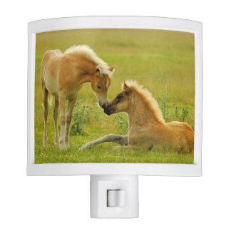 Horses foals in field. night light