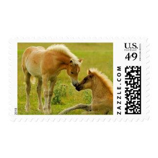 Horses foals in field. postage