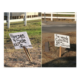 Horses for Sale in Murrieta, CA Postcard