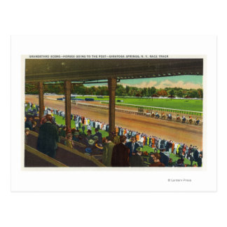 Horses Going to the Post at Race Track Postcard