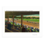 Horses Going to the Post at Race Track Postcards