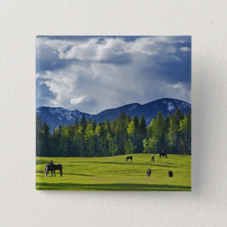 Horses graze in pasture near Whitefish, Button