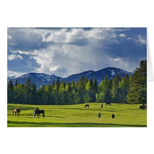 Horses graze in pasture near Whitefish, Greeting Cards