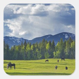 Horses graze in pasture near Whitefish, Square Sticker