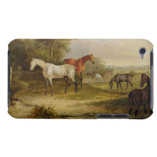 Horses Grazing: A Grey Stallion grazing with Mares Barely There iPod Covers