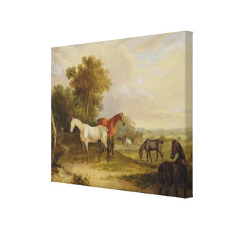 Horses Grazing: A Grey Stallion grazing with Mares Canvas Print