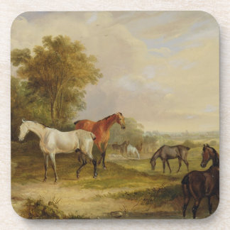 Horses Grazing: A Grey Stallion grazing with Mares Drink Coaster