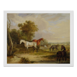 Horses Grazing: A Grey Stallion grazing with Mares Poster