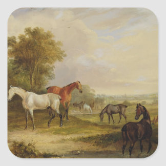 Horses Grazing: A Grey Stallion grazing with Mares Square Sticker