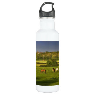 Horses grazing at Bower Hinton, Somerset 24oz Water Bottle