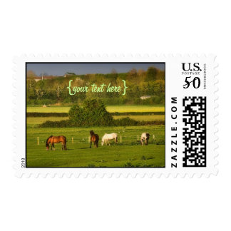 Horses grazing at Bower Hinton, Somerset Postage
