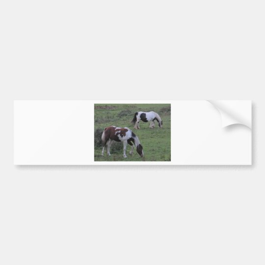 Horses Grazing Bumper Sticker