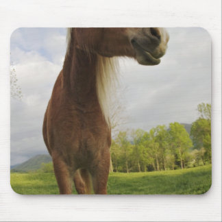 Horses grazing in meadow, Cades Cove, Great 2 Mouse Pad