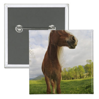 Horses grazing in meadow, Cades Cove, Great 2 Pinback Button