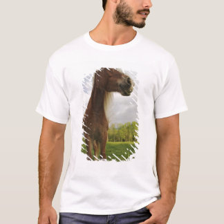 Horses grazing in meadow, Cades Cove, Great 2 T-Shirt