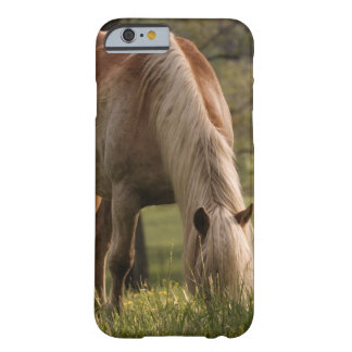Horses grazing in meadow, Cades Cove, Great 3 Barely There iPhone 6 Case