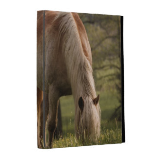 Horses grazing in meadow, Cades Cove, Great 3 iPad Folio Cases