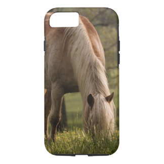 Horses grazing in meadow, Cades Cove, Great 3 iPhone 7 Case