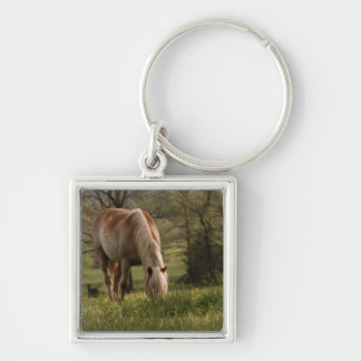 Horses grazing in meadow, Cades Cove, Great 3 Silver-Colored Square Keychain