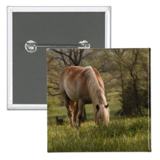 Horses grazing in meadow, Cades Cove, Great 3 Pinback Button