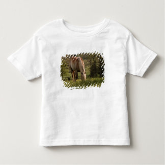 Horses grazing in meadow, Cades Cove, Great 3 T-shirt