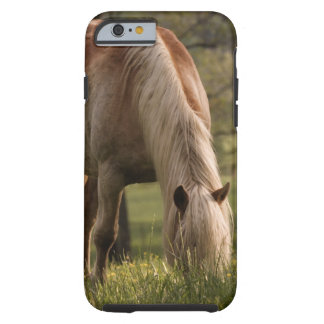 Horses grazing in meadow, Cades Cove, Great 3 Tough iPhone 6 Case