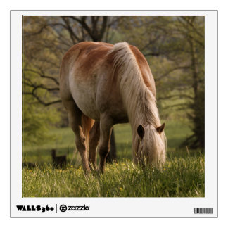 Horses grazing in meadow, Cades Cove, Great 3 Wall Sticker