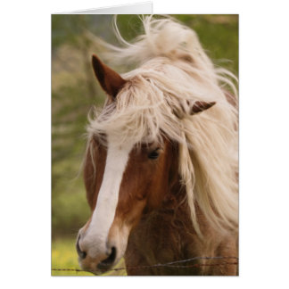 Horses grazing in meadow, Cades Cove, Great Greeting Cards