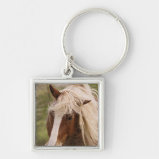 Horses grazing in meadow, Cades Cove, Great Silver-Colored Square Keychain