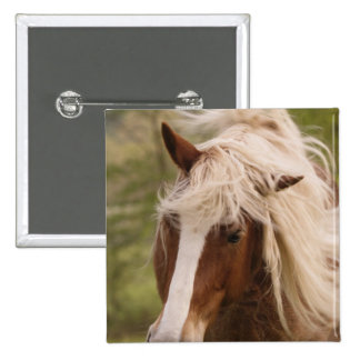 Horses grazing in meadow, Cades Cove, Great Pinback Button